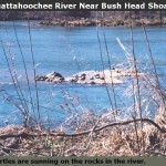 Bush-Head-With-Turtles-150×150